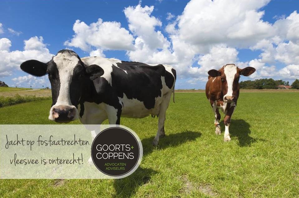 Jacht op fosfaatrechten vleesvee is onterecht